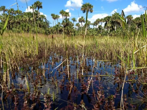 central_florida_ranchland_2