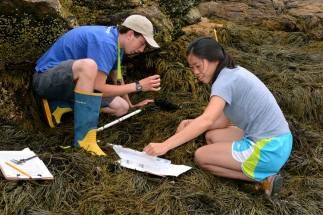 appledore_intertidal_interns